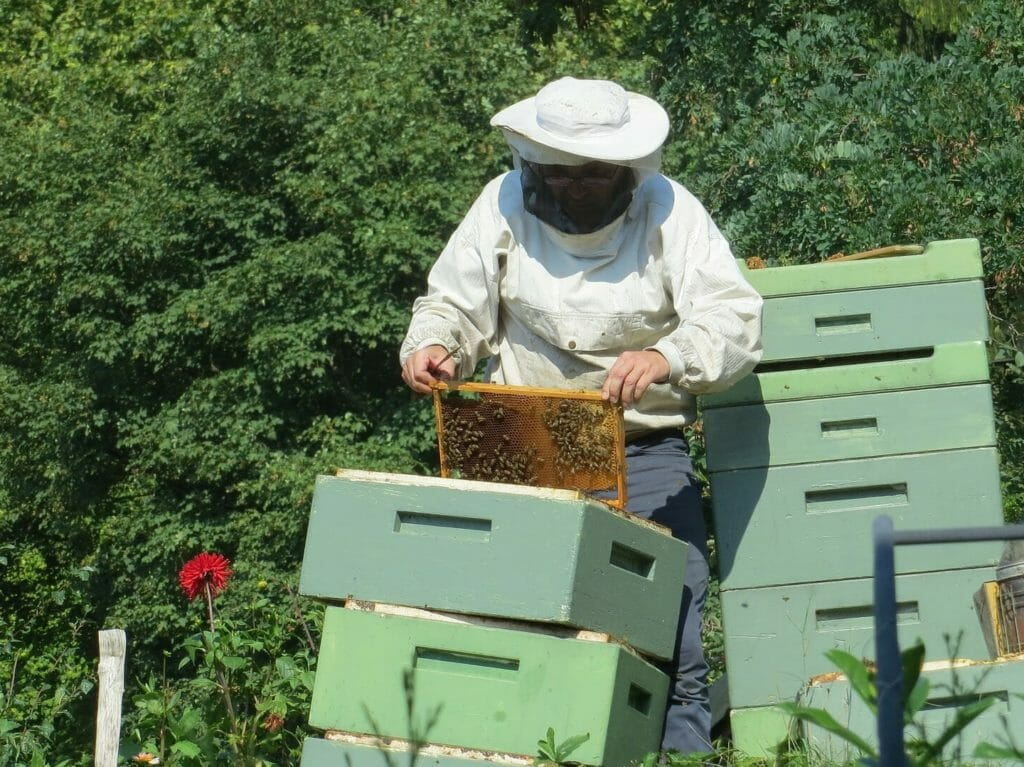 Image for blog post on Legal Requirements for Beekeeping Bee2Bee Beekeeping Supplies Australia 2019
